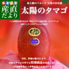 宮崎県より産地直送 JA宮崎中央 完熟マンゴー 太陽のタマゴ2L×2玉 (350gから459g×2玉) 送料無料 5月中旬以降発送