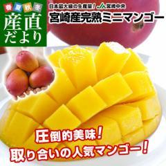 宮崎県より産地直送 JA宮崎中央 完熟ミニマンゴー 500gから600g (3玉から4玉)  送料無料 みにまんごー 宮崎マンゴー 産直だより
