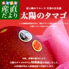 宮崎県より産地直送 JA宮崎中央 太陽のタマゴ 最高級AA品 5Lサイズ (650g以上×1玉) 送料無料 マンゴー たいようのたまご 産直だより