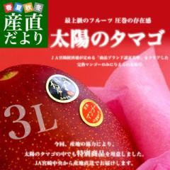 宮崎県より産地直送 JA宮崎中央 太陽のタマゴ 最高級AA品 3L×2玉 (450gから509g×2玉) 送料無料 マンゴー たいようのたまご 産直だより