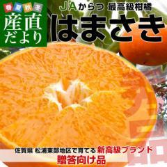 佐賀県より産地直送 JAからつ はまさき 秀品 LからSサイズ 約2.5キロ (12から18玉前後) 送料無料 唐津 浜崎