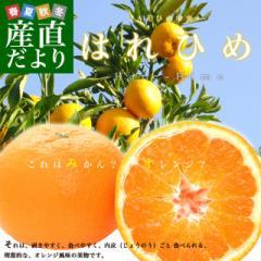 送料無料 愛媛県より産地直送 JAえひめ中央 はれひめ 2LからLサイズ 約5キロ(28玉から43玉) オレンジ 柑橘類 みかん 産直だより