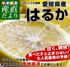 愛媛県より産地直送 JAにしうわ はるか LからMサイズ 5キロ (30から34玉) 送料無料 柑橘 オレンジ ハルカ 西宇和 八幡浜 産直だより
