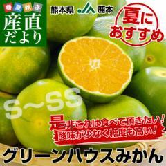 送料無料 熊本県より産地直送 JA鹿本 グリーンハウスみかん S〜SSサイズ 約2.5キロ(約32玉から40玉)化粧箱入り ミカン 蜜柑