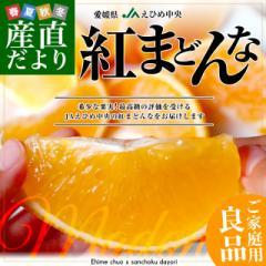 送料無料 愛媛県より産地直送 JAえひめ中央 紅まどんな 良品 3LからLサイズ 3キロ (10玉から15玉) 紅マドンナ 柑橘 オレンジ おれんじ お