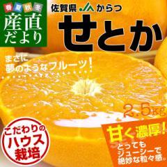 佐賀県より産地直送 JAからつ せとか 秀品 2.5キロ 化粧箱入(12から15玉) 送料無料 唐津