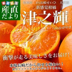 長崎県より産地直送 JA長崎せいひ 津之輝(つのかがやき) 3LからLサイズ 秀品 2.5キロ (15玉から25玉) 送料無料 柑橘
