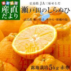 広島県産 JA三原せとだ「瀬戸田のしらぬひ」露地栽培 5キロ 赤秀 Lから2Lサイズ(20玉から24玉) 柑橘 かんきつ 不知火 しらぬい 市場