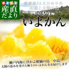 愛媛県産 JAえひめ中央 中島のいよかん 味優先のご家庭用 2Lから3Lサイズ 10キロ (30玉から36玉前後) 柑橘 オレンジ 伊予柑 市場スポット