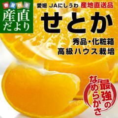 愛媛県より産地直送 JAにしうわ 高級ハウス栽培 せとか 秀品 3LからLサイズ 3キロ化粧箱 (10玉から15玉) 送料無料