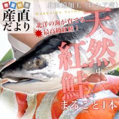 北海道加工  天然紅鮭 <中辛> まるごと1尾 1.6キロ 産直だより 北海道直送 塩紅鮭 ロシア産 1本物 新物 べにさけ ベニサケ 送料無料