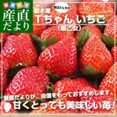 栃木県より産地直送 渡辺さんちのTちゃんいちご(栃乙女)大盛り1.2キロ(不揃い:28粒から42粒) 苺 いちご イチゴ ストロベリー 送料無料