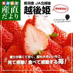 新潟県より産地直送 JA北越後 越後姫(えちごひめ) 900gから960g化粧箱 (24粒から30粒入り) 送料無料 ゆりカーゴタイプ イチゴ 苺 いちご