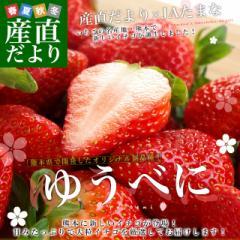 熊本県より産地直送 熊本県JAたまな 新品種のいちご 「ゆうべに」 秀品 2Lから3Lサイズ 540g(270g×2P)  送料無料 苺 イチゴ 玉名市