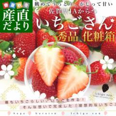 佐賀県より産地直送 JAからつ 新品種いちご いちごさん 秀品 3Lサイズ 500g化粧箱 20粒から24粒 イチゴサン イチゴさん いちごサン 唐津