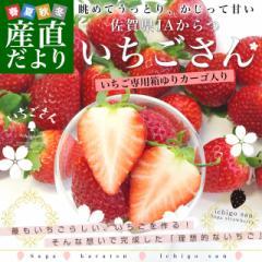 送料無料 佐賀県より産地直送 JAからつ 新品種いちご いちごさん DX 450g 15粒から18粒 苺専用箱ゆりカーゴ入り イチゴサン イチゴさん