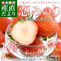 長崎県より産地直送 JA長崎せいひ 期待の新品種いちご「恋みのり」 1箱540g(270g×2パック)合計20粒から32粒入り 送料無料 苺 イチゴ