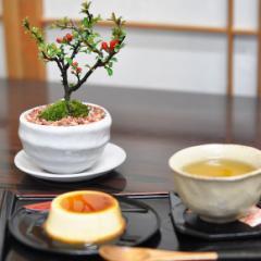 【母の日】お花の盆栽とお菓子セット【盆栽 ミニ盆栽 鉢植】