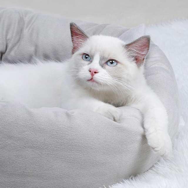 猫 画像 かわいい 無料