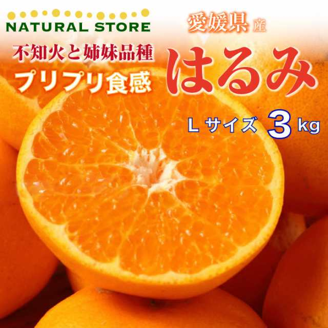 柑橘 はるみ 静岡県・清水で生まれた「はるみみかん」。味の特徴や食べ方を細かく紹介