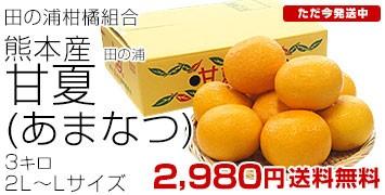 田の浦甘夏2L-L3キロ