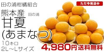 田の浦甘夏2L-L10キロ