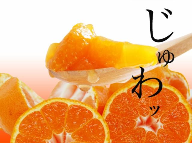 和歌山みかんの果汁、果肉たっぷりのゼリーです。