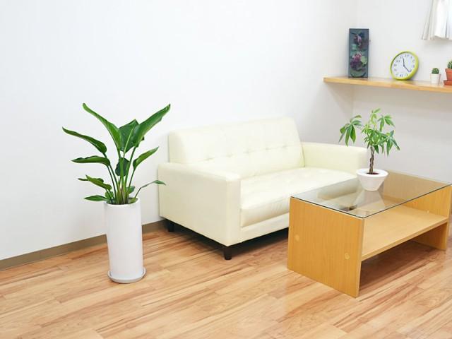 観葉植物 ストレリチア・オーガスタ 円柱形陶器鉢植え 7号 イメージ