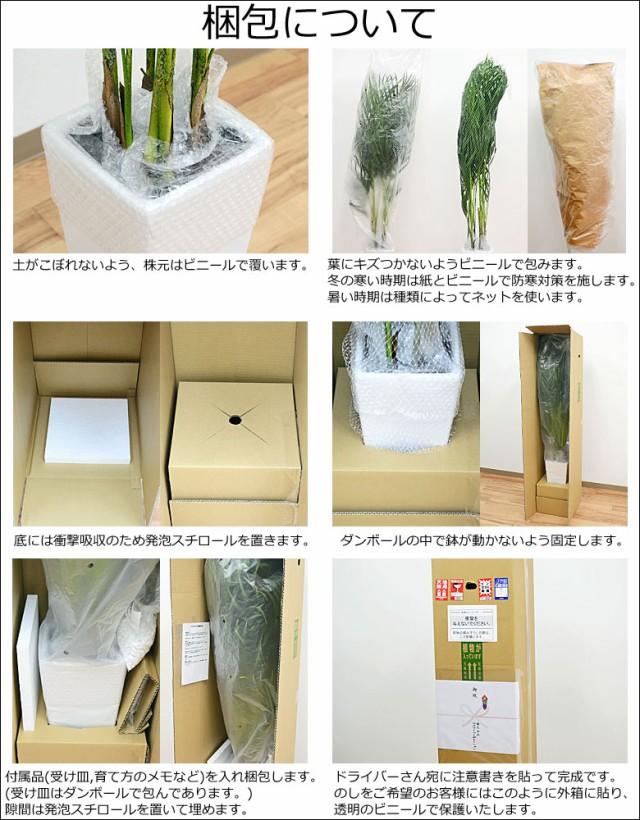 観葉植物の梱包について