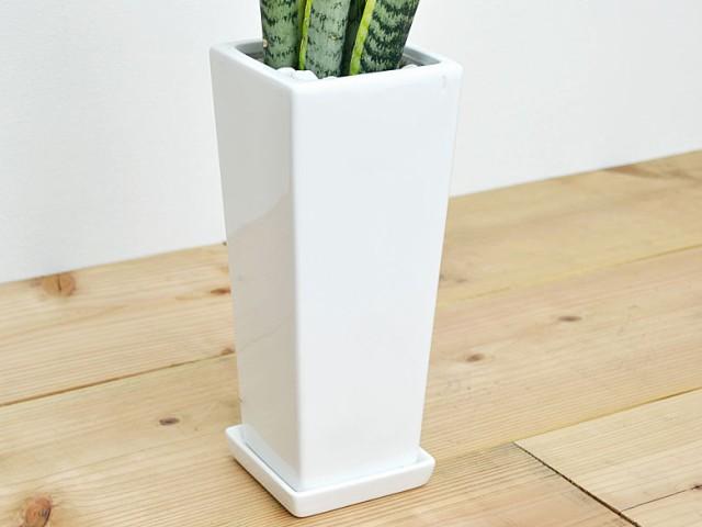 観葉植物 サンスベリア 陶器鉢植え 陶器鉢の拡大