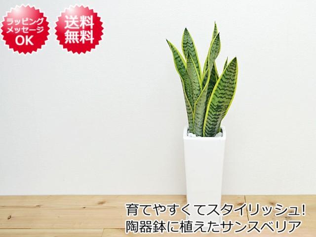 観葉植物 サンスベリア 陶器鉢植え イメージ
