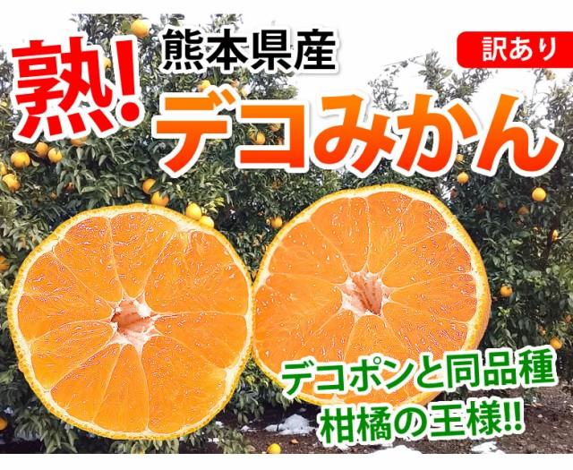 熊本県産デコみかんデコポン