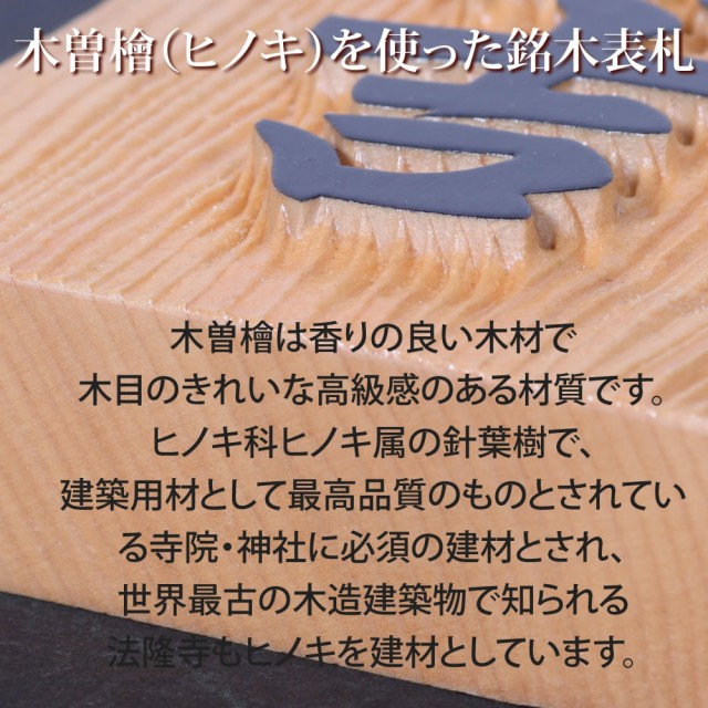 ヒノキ03