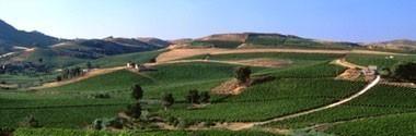 ワイン 赤ワイン ドゥーカ・エンリコ 1984年 ドゥーカ・ディ・サラパルータ 750ml 正規