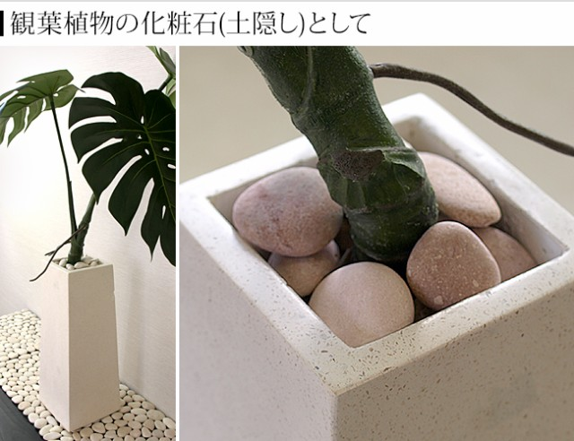 観葉植物 化粧石 土隠し