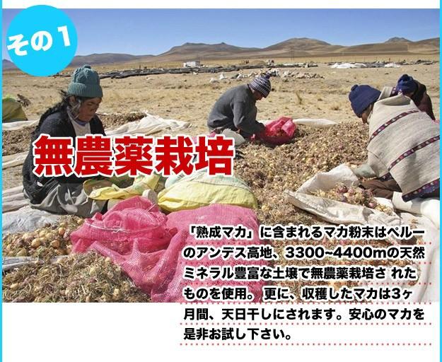 ペルーのアンデス高地で無農薬栽培されたマカを使用しています!